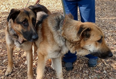El Dorado County Animal Services rescues two dogs abandoned on US50